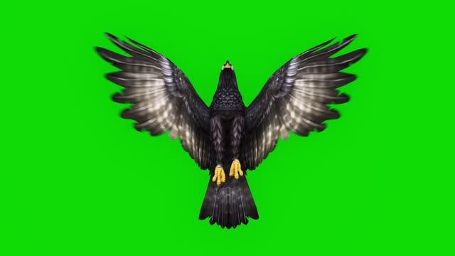 vídeos de stock, filmes e b-roll de black eagle voando animação em câmera lenta na tela verde. o conceito de animal, vida selvagem, jogos, de volta à escola, animação 3d, vídeo curto, filme, desenho animado, orgânico, chave croma, animação de personagem, elemento de design, loopabl - parte do corpo animal