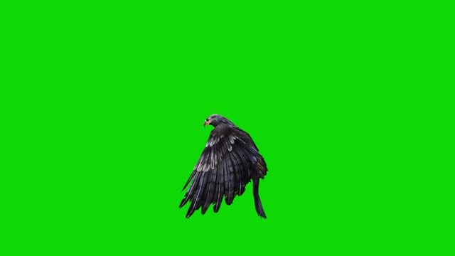 black eagle flying slow motion animation on green screen. the concept of animal, wildlife, games, back to school, 3d animation, short video, film, cartoon, organic, chroma key, character animation, design element, loopable - bird of prey stock videos & royalty-free footage
