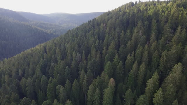 black forest - black forest stock videos & royalty-free footage