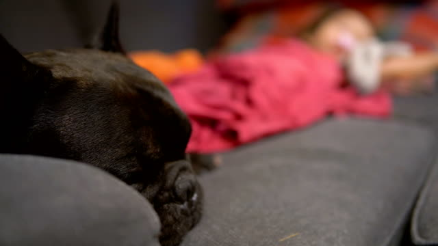 black french bulldog sleeping with asian baby girl on sofa. - baby girls stock videos & royalty-free footage