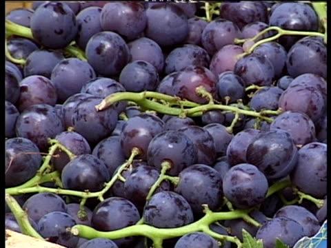 black grapes in basket tilt up to apricots in basket above montepulciano - toscana bildbanksvideor och videomaterial från bakom kulisserna