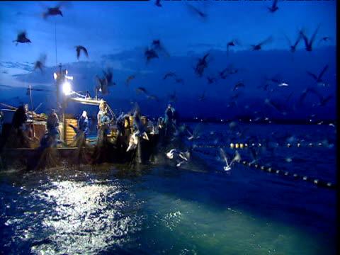 vídeos de stock, filmes e b-roll de black headed gulls flock around squid filled fishing nets, japan - indústria da pesca