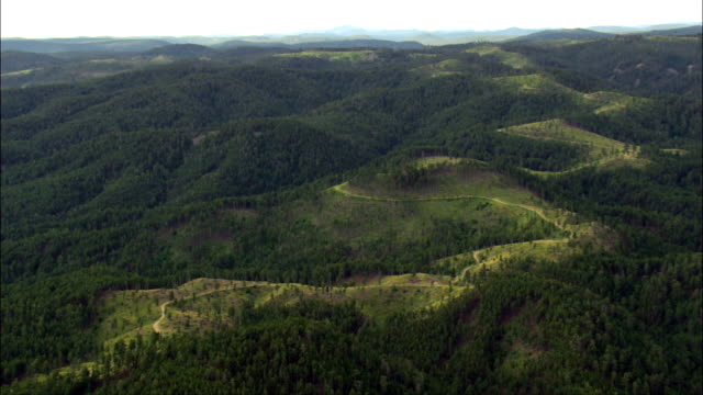 Black Hills National Forest  - Aerial View - South Dakota,  Lawrence County,  United States