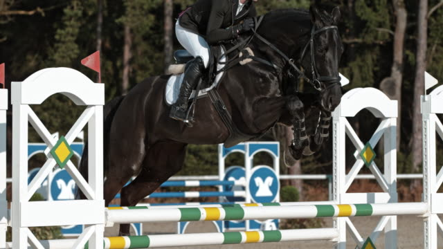 SLO MO Black horse and his rider jumping an oxer in sunshine
