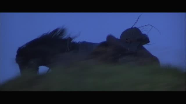 ms ts black horse at gallop with medieval saddle - galoppera bildbanksvideor och videomaterial från bakom kulisserna