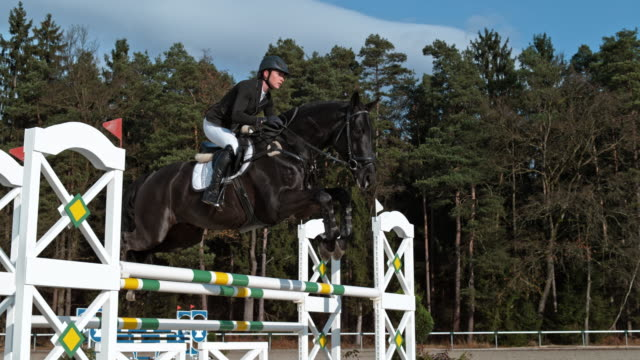 speed ramp black horse jumping an oxer in sunshine - horseback riding stock videos & royalty-free footage