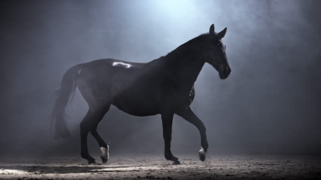 SLO MO DS Black horse running in a riding hall at night