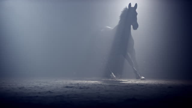 vídeos y material grabado en eventos de stock de slo mo ds black horse running in mist at night - etéreo conceptos