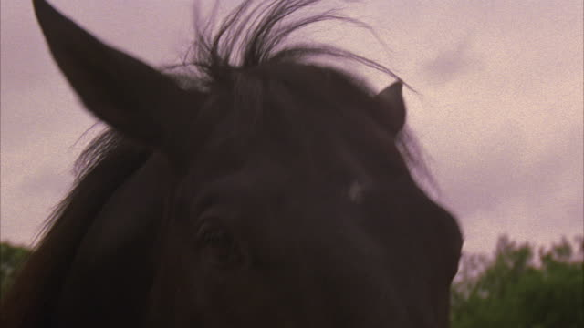 a black horse whinnies and shows its teeth. - animal hair stock videos & royalty-free footage