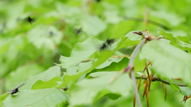 vídeos de stock e filmes b-roll de black insects swarm green leaves - grupo médio de animais