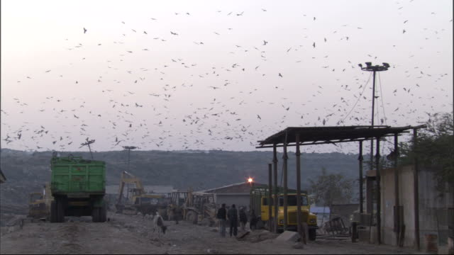 Black kites wheel over dump. Available in HD.