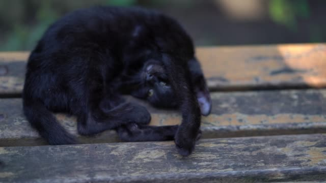 black kitten chilling - napping stock videos & royalty-free footage