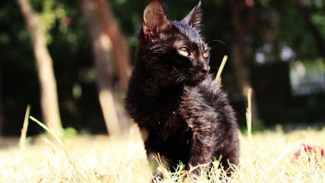 冬の季節に公園に座っている黒い子猫 - 黒猫点の映像素材/bロール
