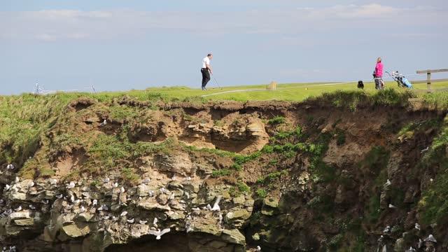 black legged kittiwakes, rissa tridactyla, nesting on sea cliffs below seahouses golf course on july 19, 2021 northumberland, uk. - aquatic organism stock videos & royalty-free footage