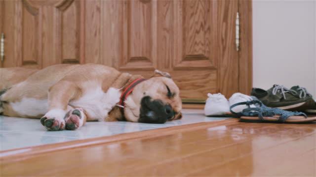 Schwarz Mund cur Hund Schlafen auf dem Boden neben der Tür