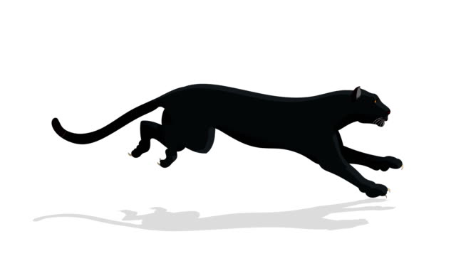 black panther animal run cycle animation - puma stock videos & royalty-free footage