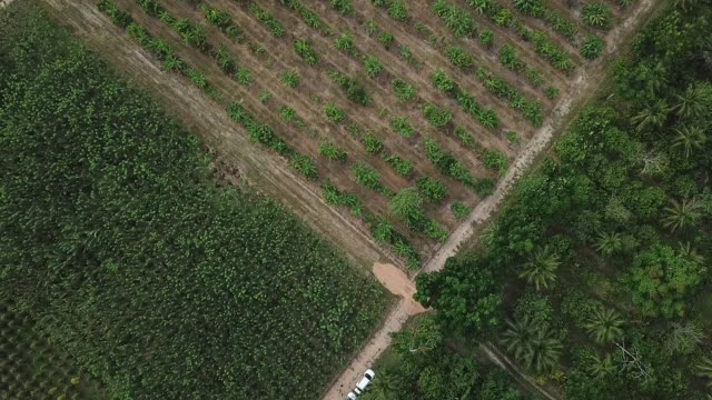 black pepper plantation in brazil - plantation stock videos & royalty-free footage