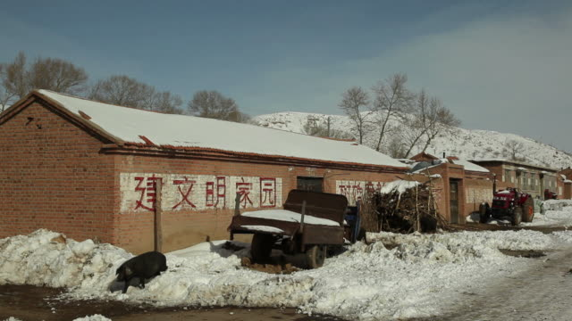 ws black pigs in snow in front of house / inner mongolia, china - ファームハウス点の映像素材/bロール