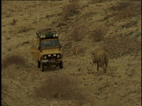 vidéos et rushes de black rhino charges at off road vehicle, hits the far side and runs off, namibia - charger activité