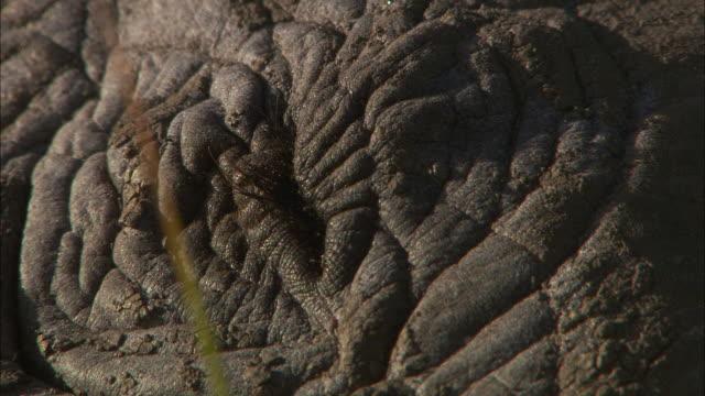 a black rhinoceros blinks. - human eye stock videos & royalty-free footage