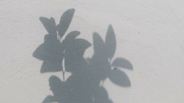 black shadows, the leaves which were blown on the white concrete wall. - botany stock videos & royalty-free footage
