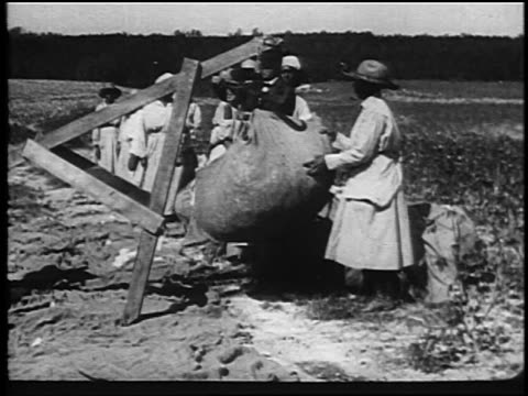 b/w 1920 black sharecropper women watching as overseer weighs cotton outdoors / southern us - anno 1920 video stock e b–roll