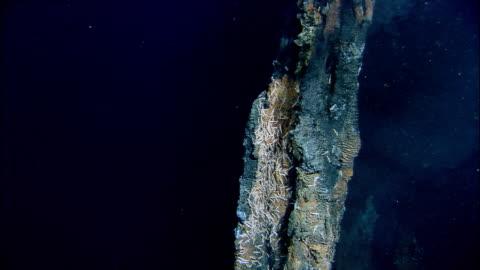 vídeos de stock, filmes e b-roll de black smoker deep sea vent rises from ocean floor, mid atlantic ridge - oceano atlântico