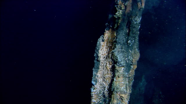 black smoker deep sea vent rises from ocean floor, mid atlantic ridge - atlantic ocean stock videos & royalty-free footage
