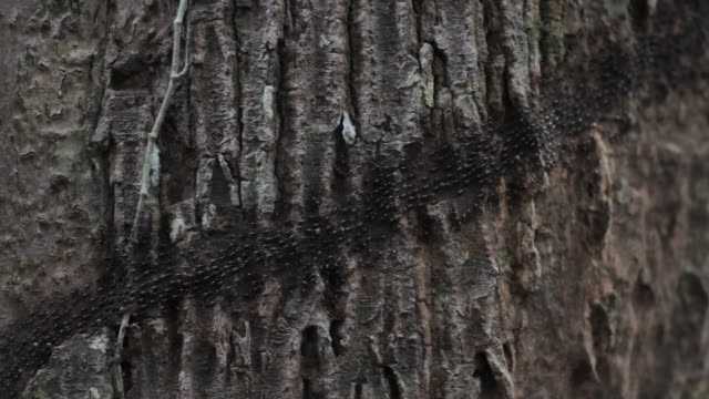 black termites migrating - plant bark stock videos & royalty-free footage