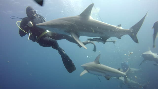 black tip sharks on aliwal shoal - aqualung diving equipment stock videos & royalty-free footage
