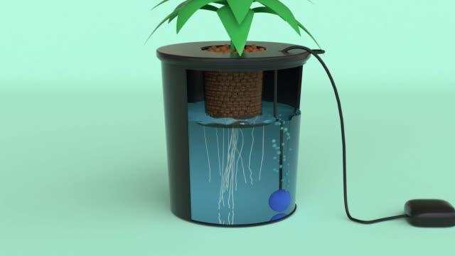 黒い木のポット緑のシーン計画水耕栽培システムモーション3dレンダリング - 水栽培点の映像素材/bロール