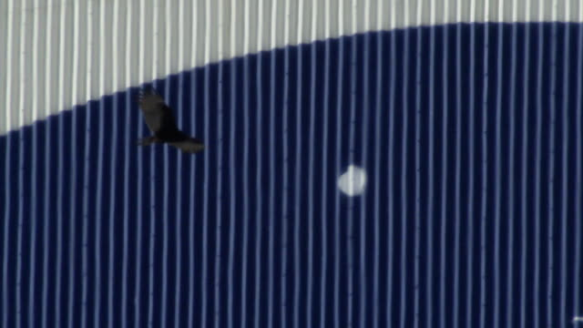 black vultures at vab, nasa - kennedy space center stock-videos und b-roll-filmmaterial