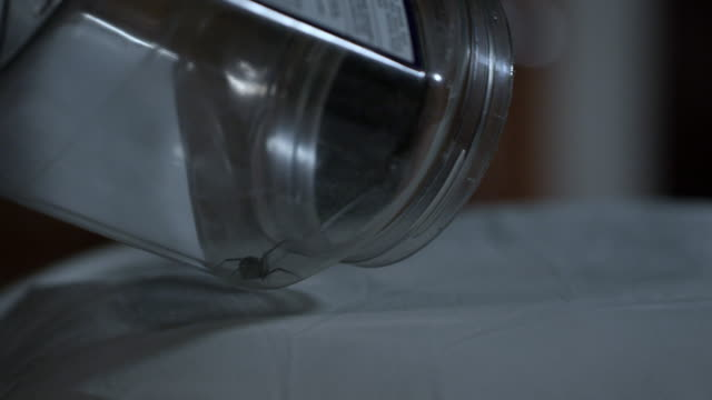black widow spider being let out of container onto pillow - black widow spider stock videos & royalty-free footage