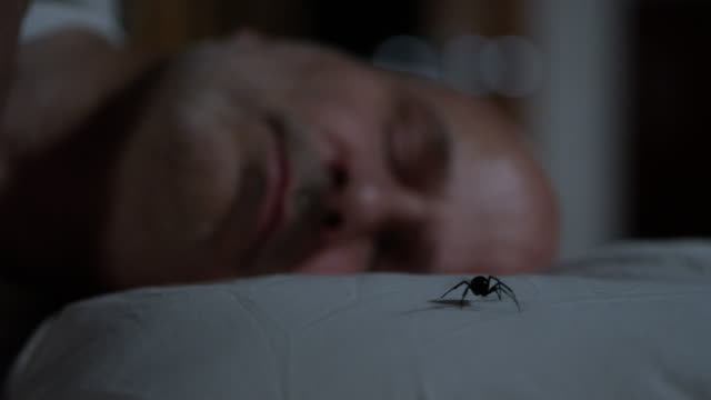 black widow spider crawls across mans pillow - arachnophobia stock videos and b-roll footage