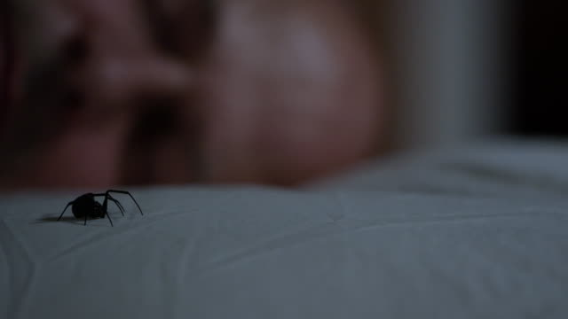 black widow spider crawls across pillow while man sleeps - arachnophobia stock videos and b-roll footage