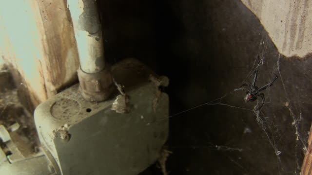 ha, ms, black widow spider (latrodectus mactans) in web in building corner, burbank, california, usa - corner stock videos & royalty-free footage