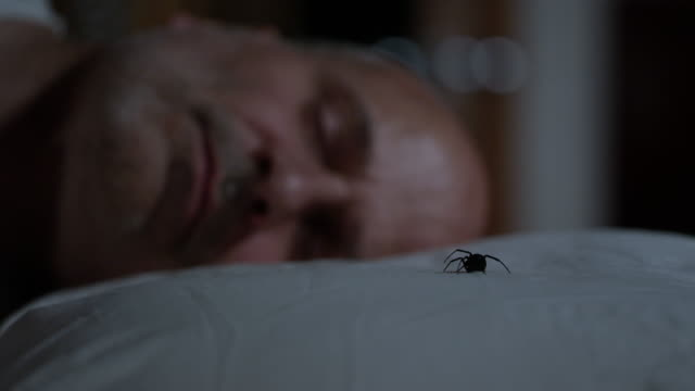 vídeos de stock, filmes e b-roll de black widow spider sitting next to sleeping man on pillow - engatinhando