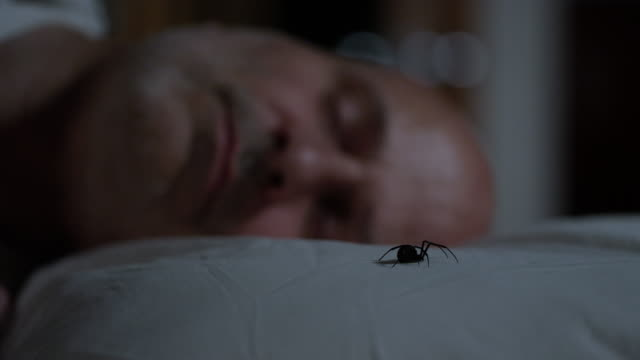 black widow spider sitting on pillow next to sleeping man - arachnophobia stock videos and b-roll footage