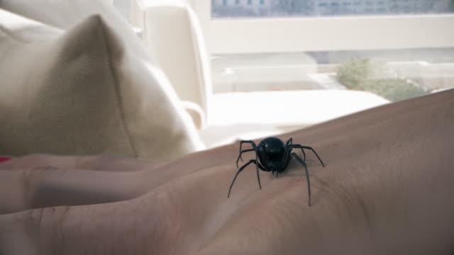 black widow spider stinging hand - spider stock videos & royalty-free footage