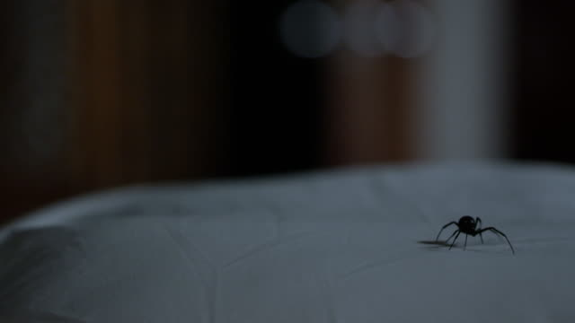 Black Widow Spider walking around on pillow in the dark