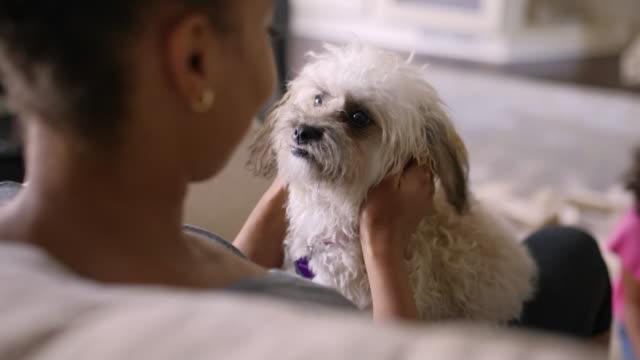 black woman petting dog on sofa - stroking stock videos & royalty-free footage