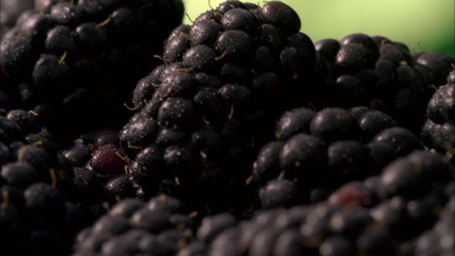 ecu, selective focus, pan, blackberries covered in dew  - ripe stock videos & royalty-free footage