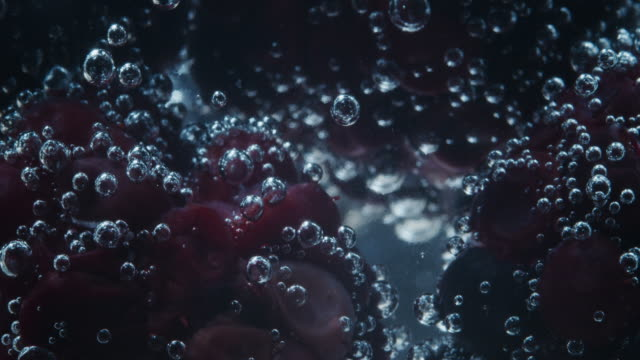 blackberries in soda water. extreme close-up - juicy stock videos & royalty-free footage