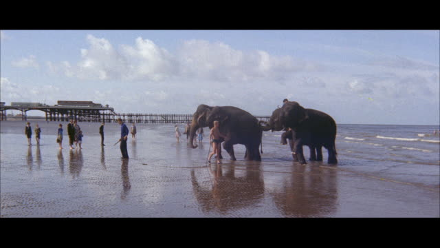 1960 - blackpool - circus elephants and horses at the beach - blackpool stock-videos und b-roll-filmmaterial