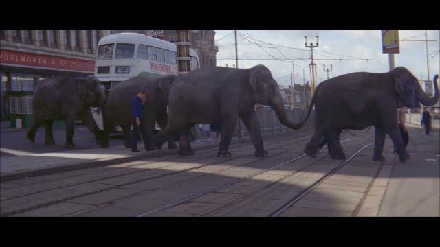 1960 - blackpool - circus elephants being let across the street - blackpool stock-videos und b-roll-filmmaterial