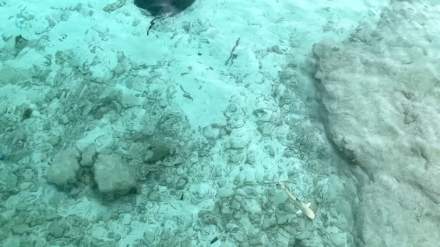 blacktip reef shark in shallow waters of the maldives - shallow stock videos & royalty-free footage