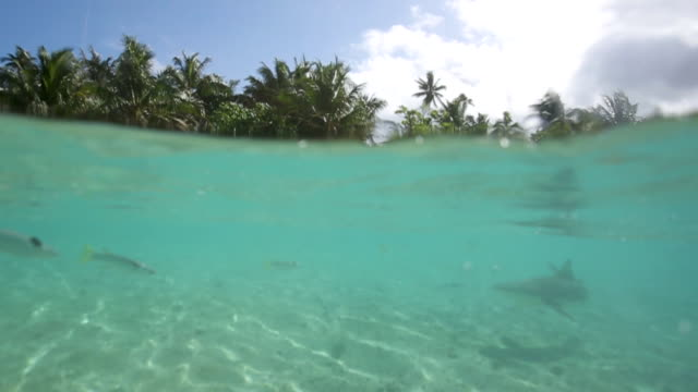 blacktip reef shark swims near tahiti shore, underwater point of view - french overseas territory stock videos & royalty-free footage