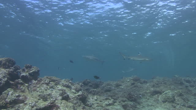blacktip reef shark - medium group of animals stock videos & royalty-free footage