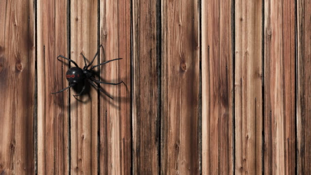 blackwidow spider on wooden background - spider stock videos & royalty-free footage