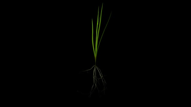 blade of grass - blade of grass stock videos & royalty-free footage